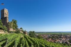 12 Wein, Burgen, blauer Himmel